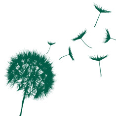 A silhouette of a dandelion symbolising end of life
