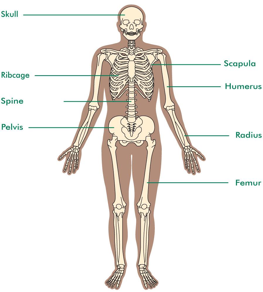 The Bones Bone Cancer Macmillan Cancer Support