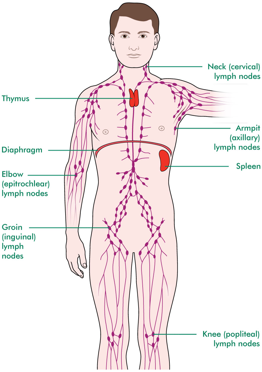 Tests To Check Your Lymph Nodes Diagnosing Cancer Macmillan
