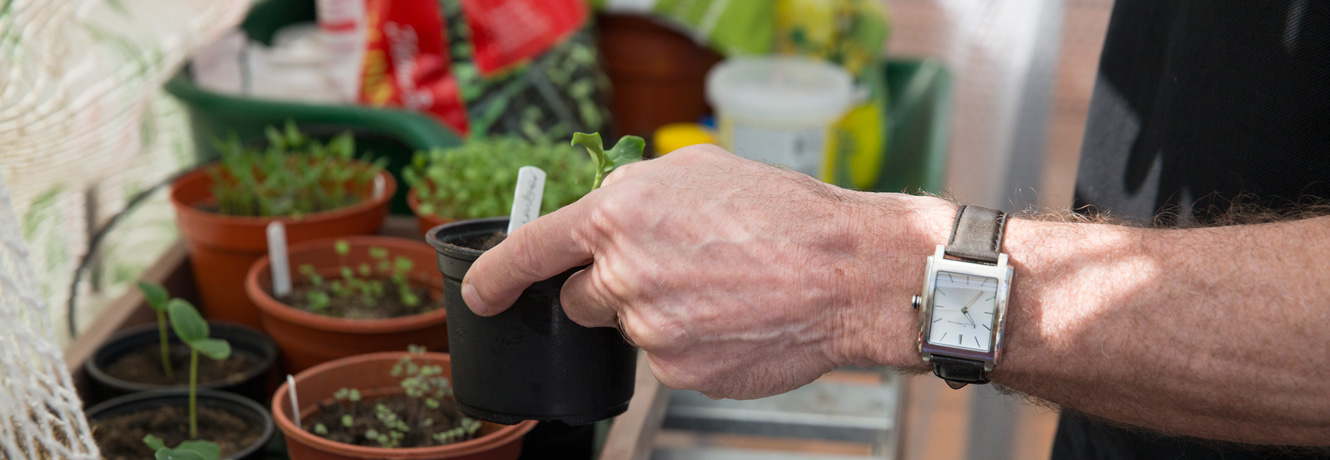 A seedling is held in a man's hand, with other plant pots and seedlings in the background.