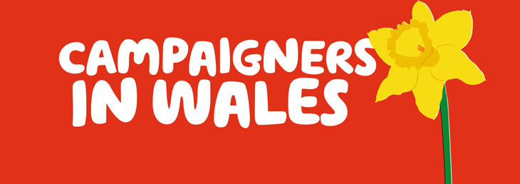 An illustration of a daffodil with 'campaigners in Wales' integrated into it.