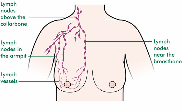 The lymph nodes near the breast.