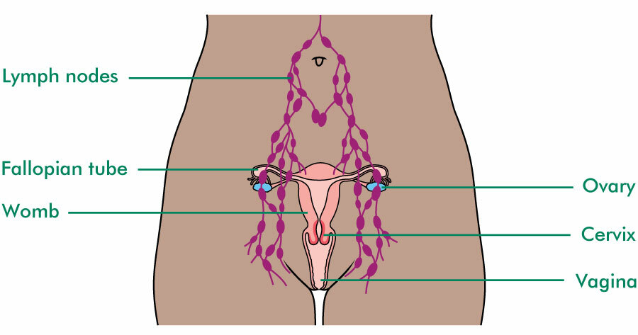 Female pelvic lymph nodes