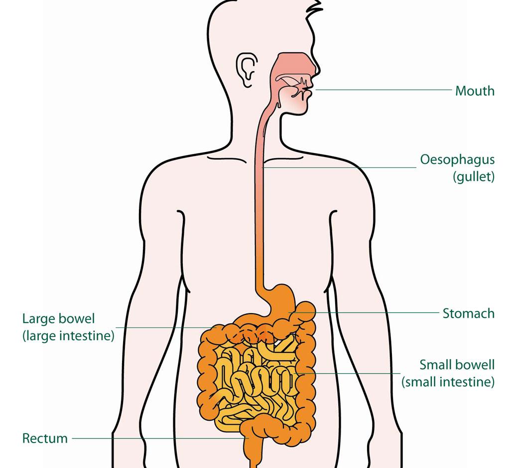 Gerd In Menopause What Causes It
